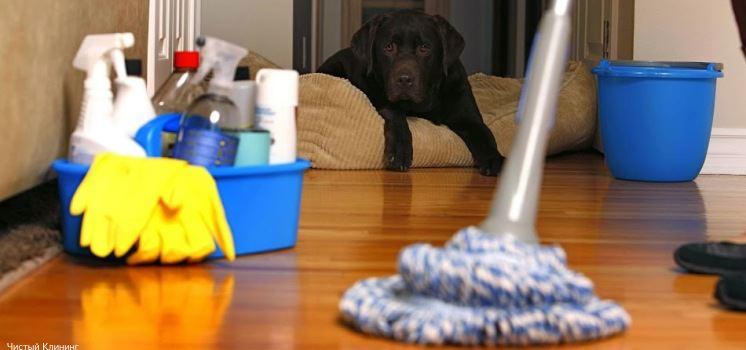 Уборка после животных фото 3