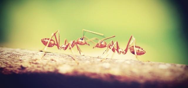 Как избавиться от муравьев в квартире фото 2